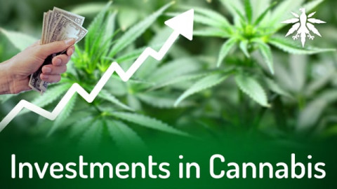 Investments in Cannabis | DHV-News # 286