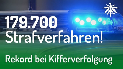 Rekord bei Kifferverfolgung   DHV-News #201
