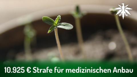 10.925 Euro Strafe für medizinischen Anbau | DHV-News # 289