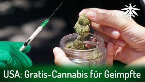 USA: Gratis-Cannabis für Geimpfte | DHV-News # 290