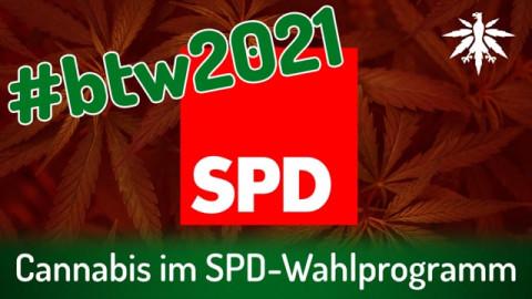 Cannabis im SPD-Wahlprogramm | DHV-News # 293