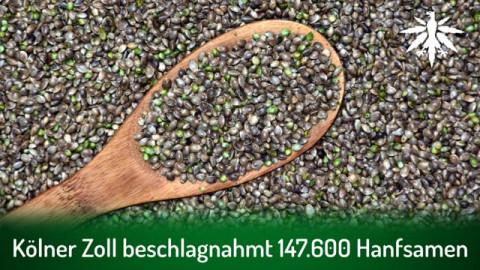 Kölner Zoll beschlagnahmt 147.600 Hanfsamen | DHV-News # 298