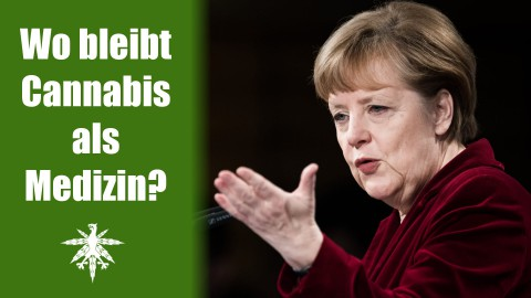 Frau Merkel, wo bleibt Cannabis als Medizin? | DHV News #61