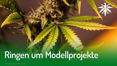 Ringen um Modellprojekte | DHV-News #212