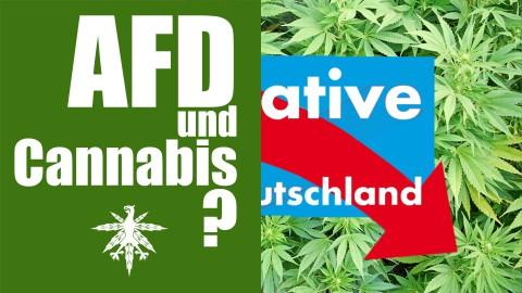 Wie steht die AfD zu Cannabis? | DHV News #81