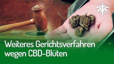 Weiteres Gerichtsverfahren wegen CBD-Blüten | DHV-News #248