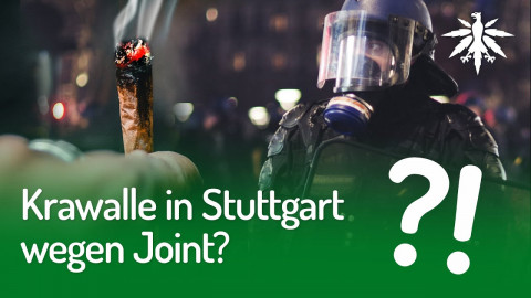 Krawalle in Stuttgart wegen Joint? | DHV-News #254