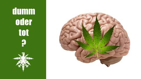 Cannabis macht nicht dumm und tot | DHV News #64