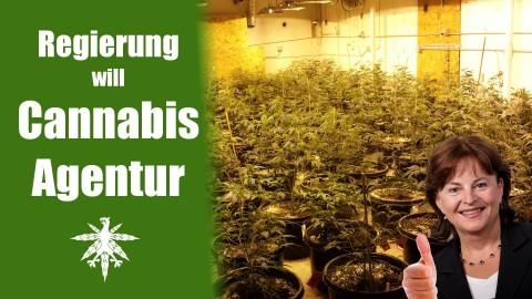 Cannabisagentur - Bundesregierung regelt medizinischen Cannabisanbau | DHV News #57