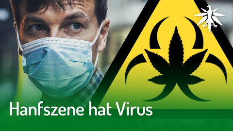 Hanfszene hat Virus | DHV-News #240