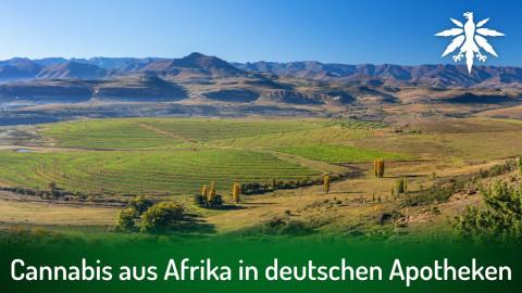 Cannabis aus Afrika in deutschen Apotheken | DHV-News # 302