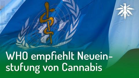 WHO empfiehlt Neueinstufung von Cannabis | DHV-News #194