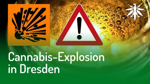 Cannabis-Explosion in Dresden | DHV News #141