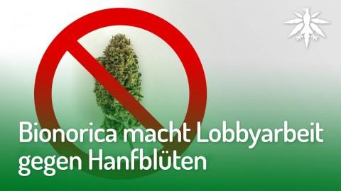 Bionorica macht Lobbyarbeit gegen Hanfblüten   DHV-News #161