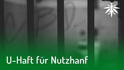 U-Haft für Nutzhanf | DHV-News #180