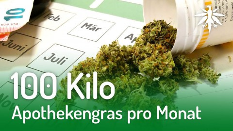 100 Kilo Apothekengras pro Monat | DHV-News #174